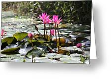 Up Close Water Lilies  Greeting Card
