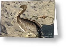 Up Close With A Pelican On A Sand Beach Greeting Card
