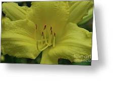 Up-close With A Very Bright Yellow Daylily Flower Greeting Card