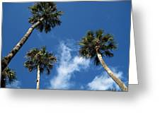 Up To The Sky Palms Greeting Card