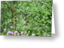 Up, Up And Away-black Swallowtail Butterfly Greeting Card