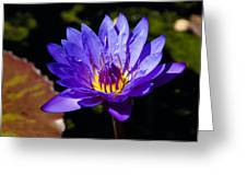 Upbeat Violet Elegance - The Beauty Of Waterlilies  Greeting Card