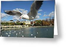 Upclose And Personal Greeting Card