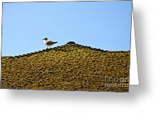 Upon The Roof Greeting Card