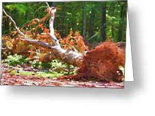 Uprooted Trees Greeting Card