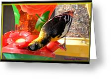 Upside Down Oriole Greeting Card