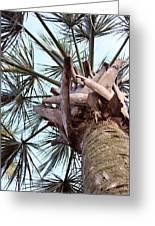 Upward Palm Greeting Card