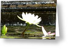Urban Lily Greeting Card