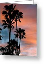 Urban Palms Greeting Card