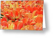 United States Capital Tulips Greeting Card