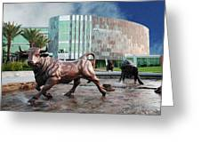 Usf Tampa Greeting Card