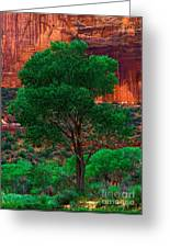 Utah - Cottonwood Greeting Card