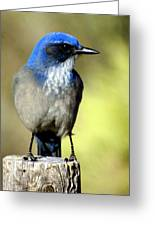 Utah Bird Greeting Card