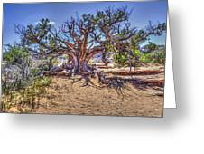 Utah Juniper On The Climb To Delicate Arch Arches National Park Greeting Card