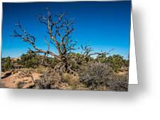 Utah Juniper Greeting Card