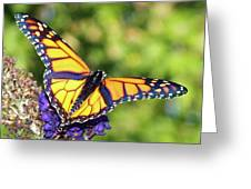 V Shaped Monarch  Greeting Card