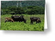 Vacas De Ahuachapan 2 Greeting Card