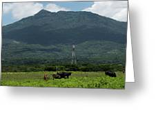 Vacas De Ahuachapan 4 Greeting Card