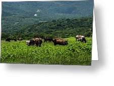 Vacas De Ahuachapan Greeting Card