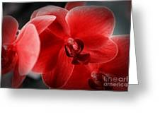 Valentine Orchid Greeting Card