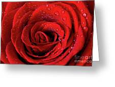 Valentine Swirl Greeting Card by Tracy Hall