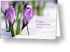 Valentines Day Crocuses Greeting Card