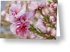 Valley Blossoms Greeting Card