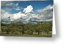 Valley Oaks Greeting Card