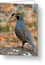 Valley Quail Greeting Card