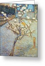 Van Gogh: Peartree, 1888 Greeting Card