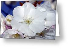 Vancouver 2017 Spring Time Cherry Blossoms - 2 Greeting Card