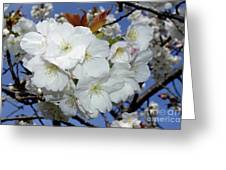 Vancouver 2017 Spring Time Cherry Blossoms - 5 Greeting Card