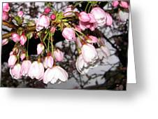 Vancouver Cherry Blossoms Greeting Card