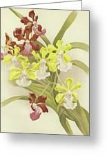 Vanda Insignis And Var Scroederiana  Greeting Card