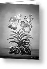 Vanda Orchids In Black And White Greeting Card