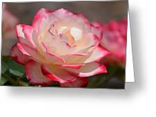 Vanilla Cherry Rose Greeting Card