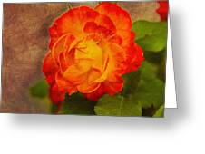 Variegated Beauty - Rose Floral Greeting Card