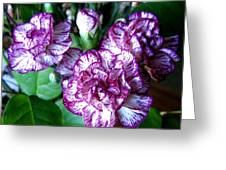 Variegated Carnations Greeting Card