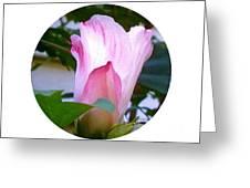 Variegated Hibiscus Flower In Circle Greeting Card
