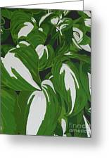 Variegated Hostas Greeting Card