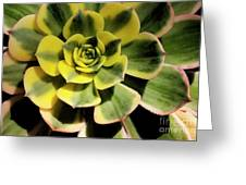 Variegated Succulent Greeting Card