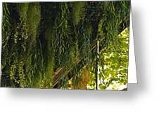Vegetal Roof Greeting Card