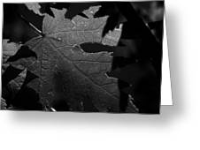 Veins Of A Maple Greeting Card