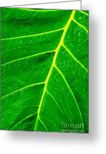 Veins Of Green Greeting Card