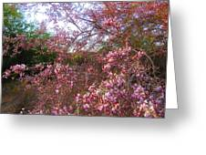 Vekol Wash Desert Ironwood In Bloom Greeting Card