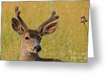 Velvet Greeting Card