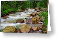 Velvet Green Forest Greeting Card