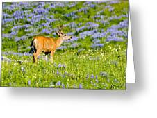 Velvet On Lupine Greeting Card