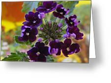 Velvet Petals Greeting Card