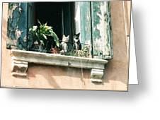 Venetian Cats Greeting Card